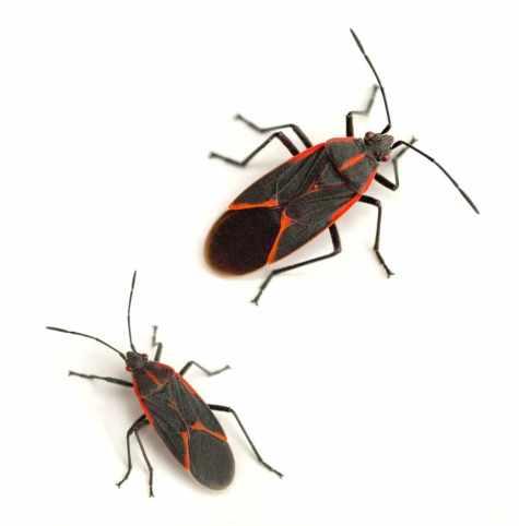 oranage-Bugs-Pest-Control